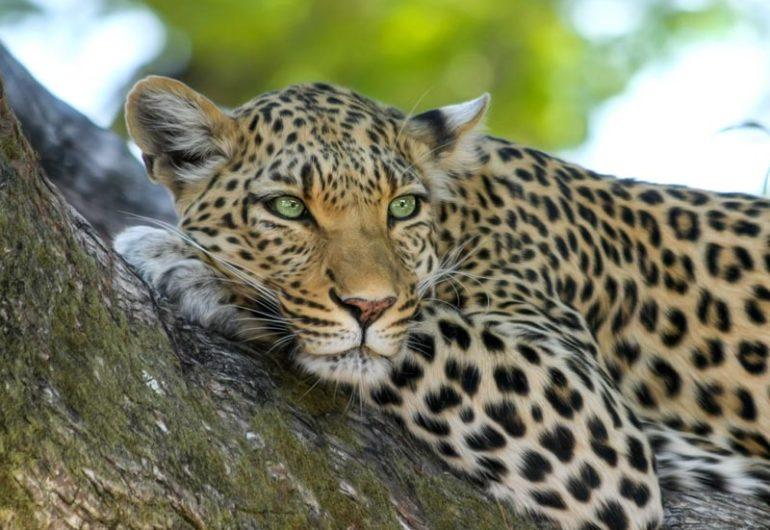 animali safari tanzania
